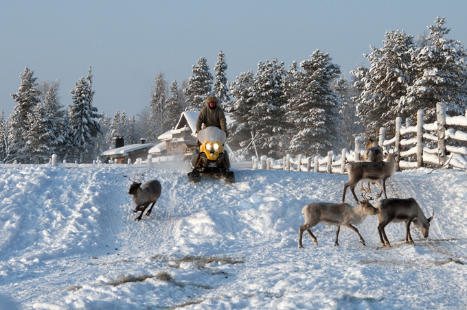 Husky- and Reindeer Park